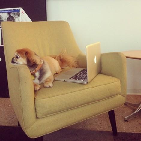 ruby_at_melanies_office